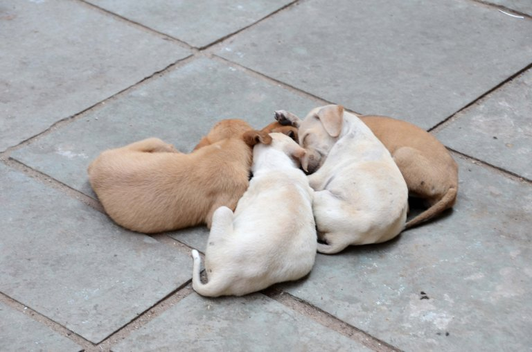 Puppies taking their morning nap