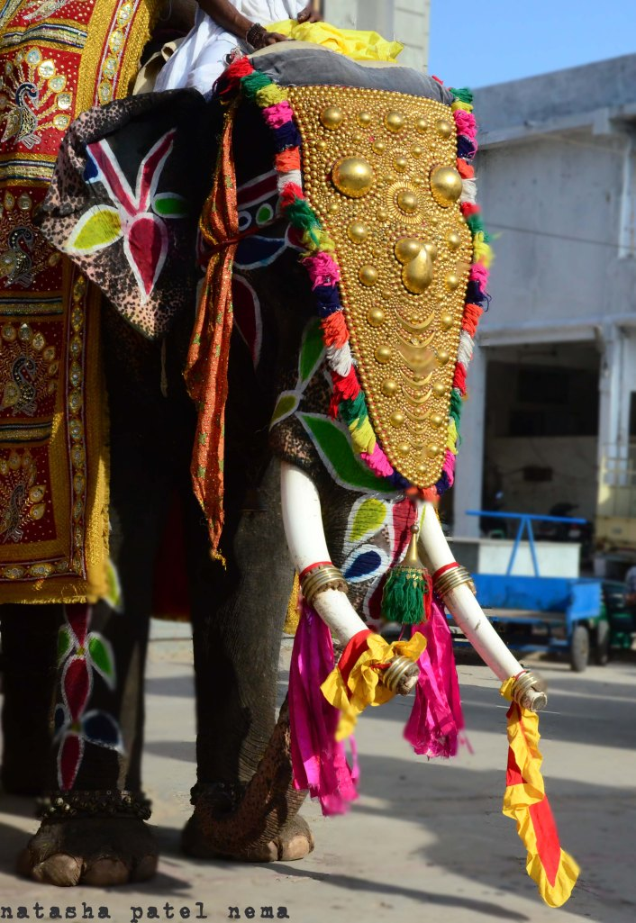 latest in elephant fashion...how handsome he looks...