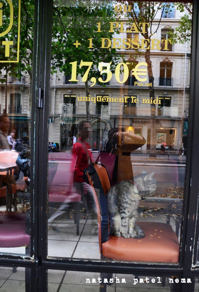 Reflection of me, taking the picture of the cat in the closed cafe..